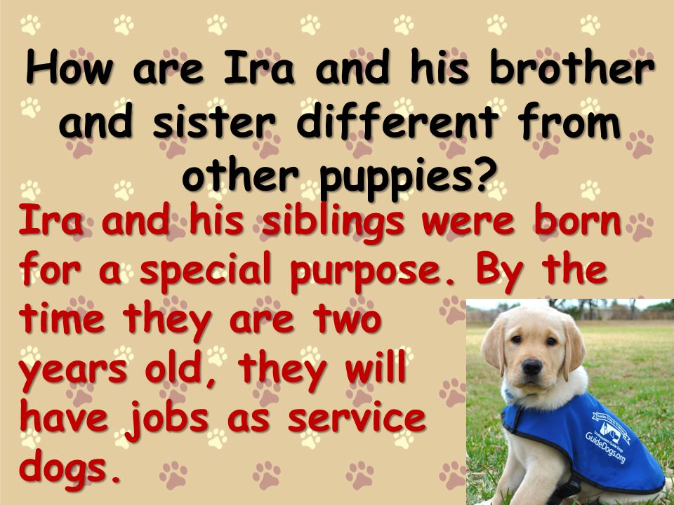 How are Ira and his brother and sister different from other puppies