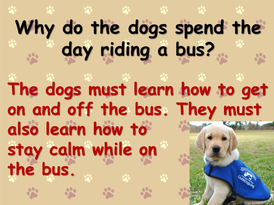 Why do the dogs spend the day riding a bus