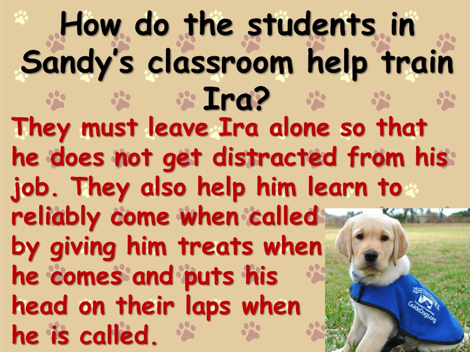 How do the students in Sandy's classroom help train Ira