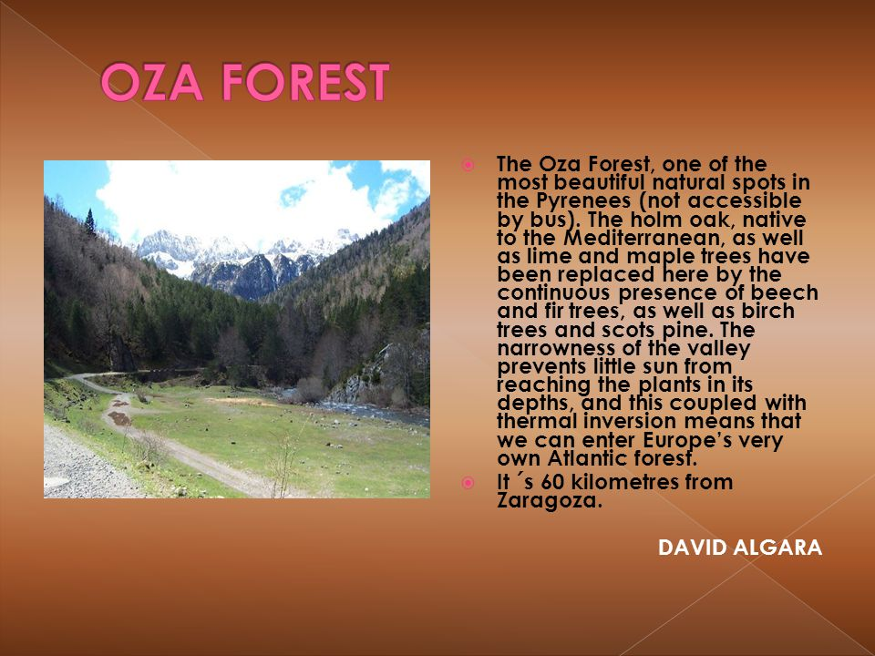 OZA FOREST