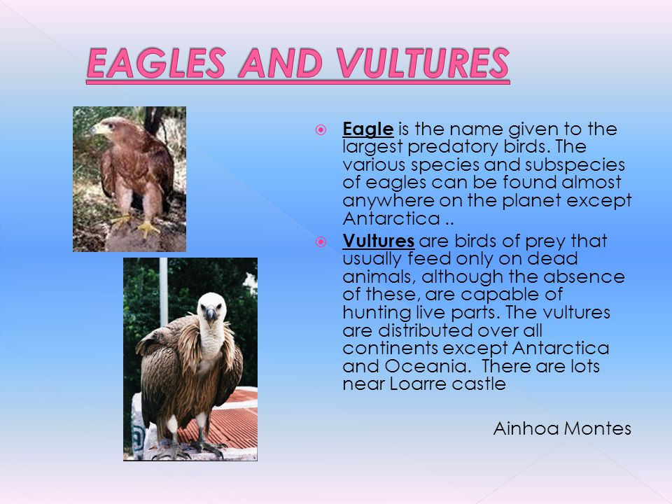EAGLES AND VULTURES
