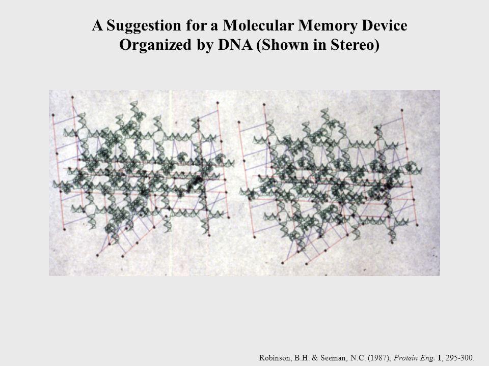 Robinson, B.H. & Seeman, N.C. (1987), Protein Eng. 1, 295-300.