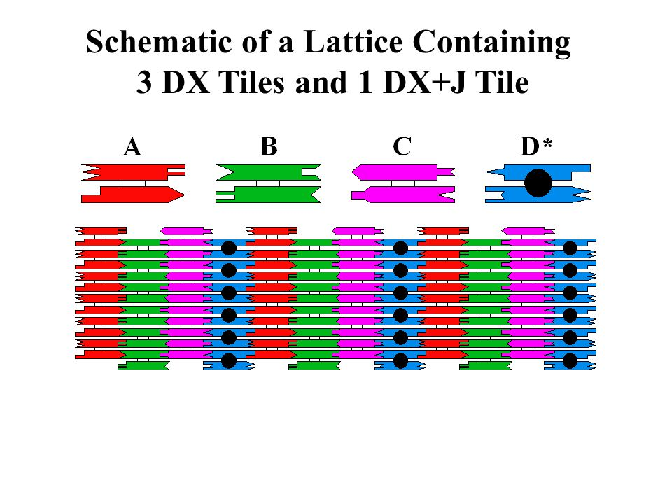 Schematic of a Lattice Containing