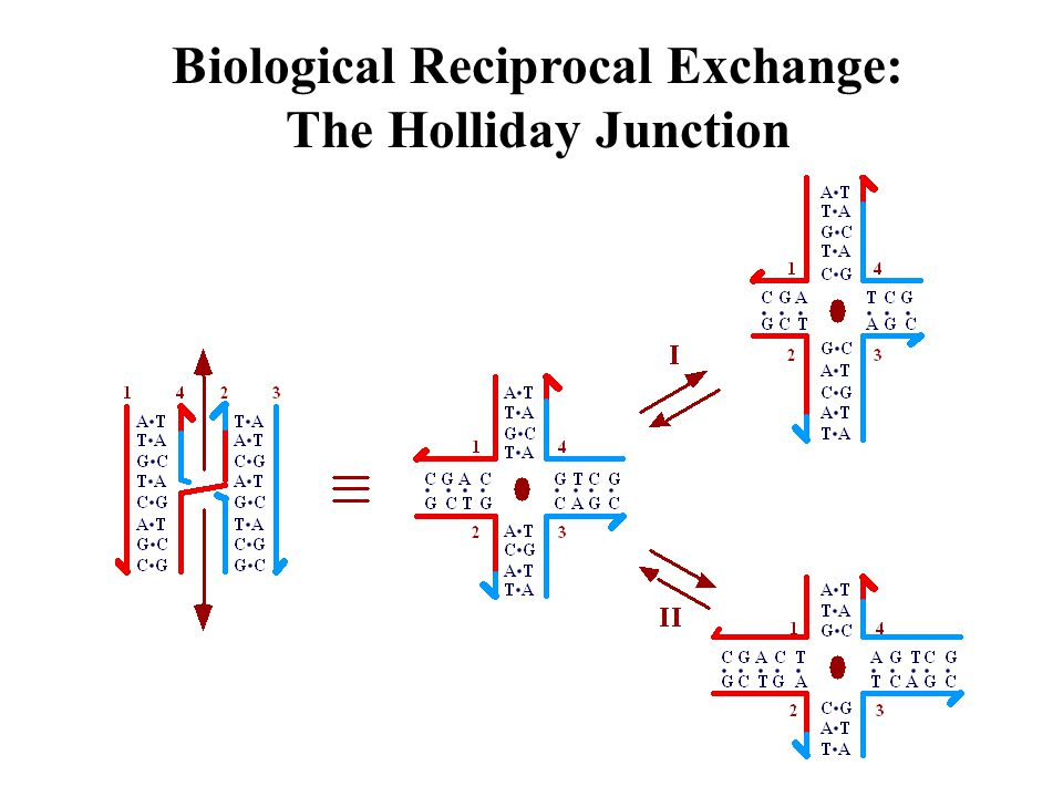 Biological Reciprocal Exchange: