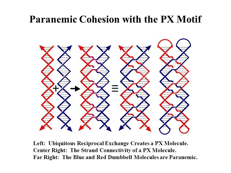 Paranemic Cohesion with the PX Motif