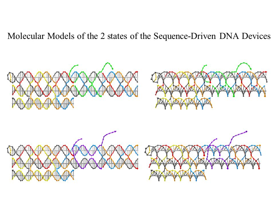 Molecular Models of the 2 states of the Sequence-Driven DNA Devices
