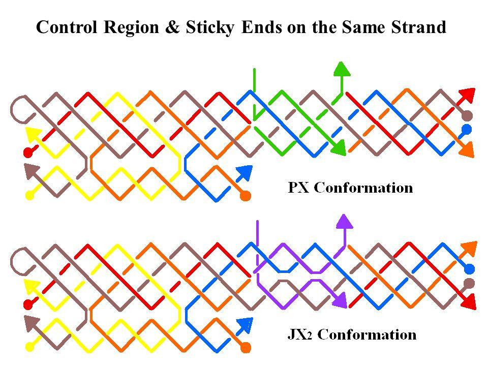 Control Region & Sticky Ends on the Same Strand