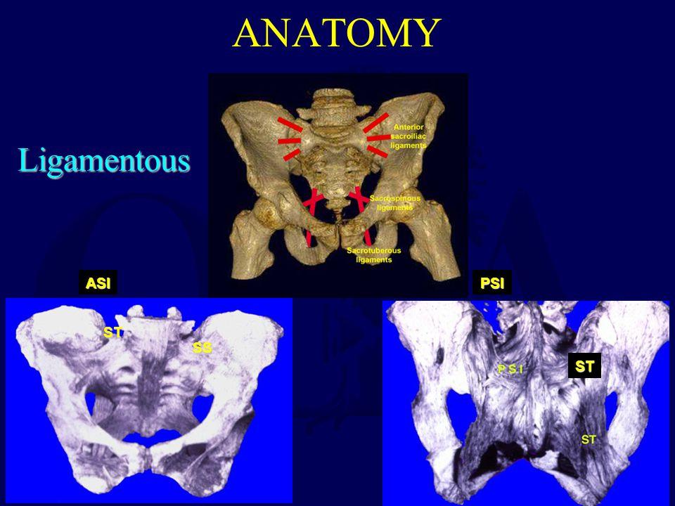 ANATOMY Ligamentous ASI PSI ST SS ST