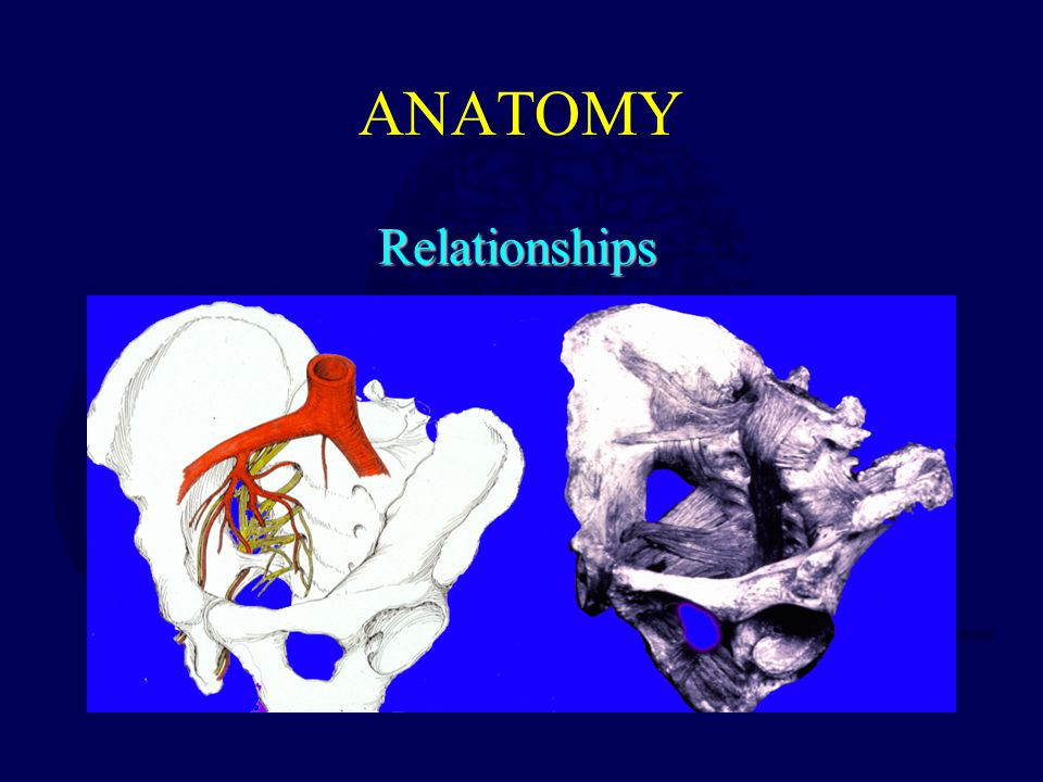 ANATOMY Relationships