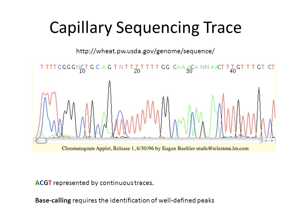 Capillary Sequencing Trace
