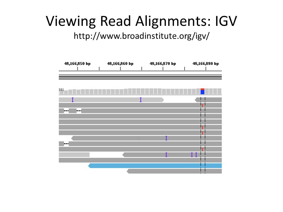 Viewing Read Alignments: IGV http://www.broadinstitute.org/igv/