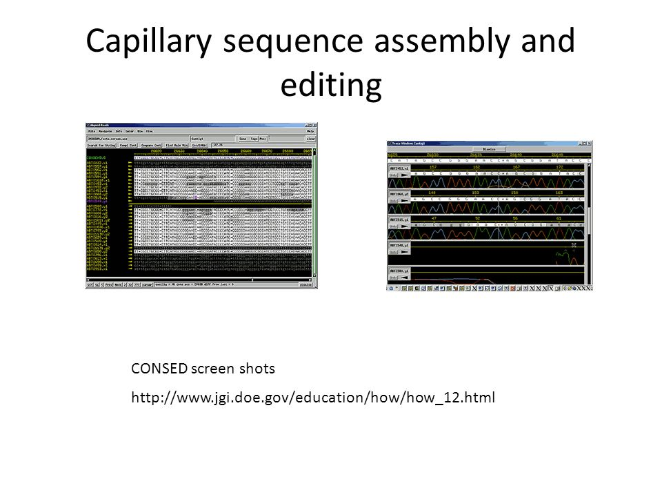 Capillary sequence assembly and editing