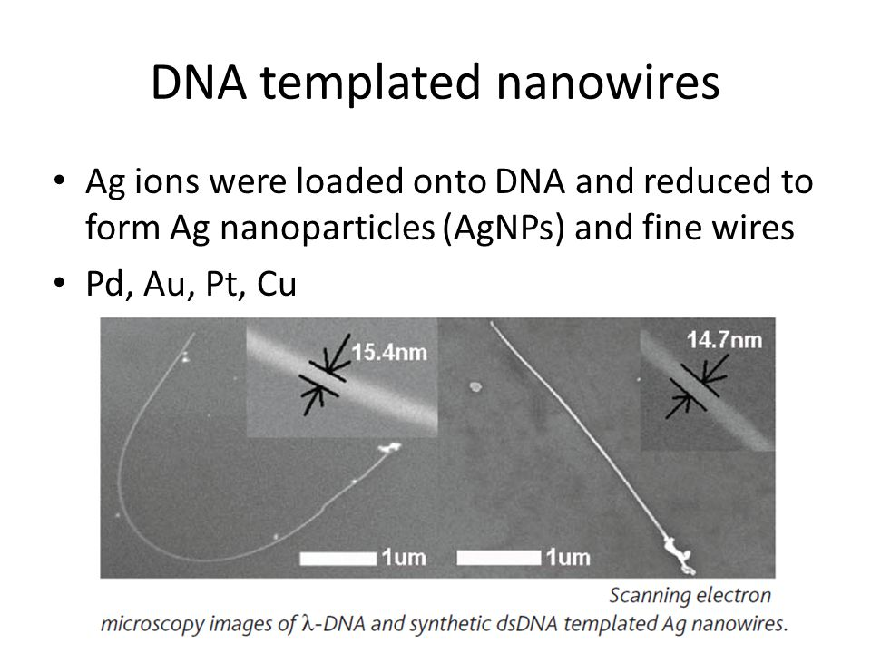 DNA templated nanowires