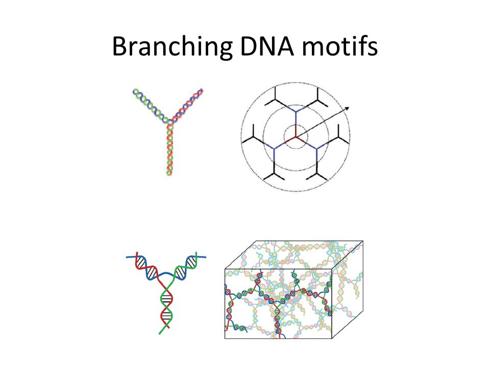 Branching DNA motifs