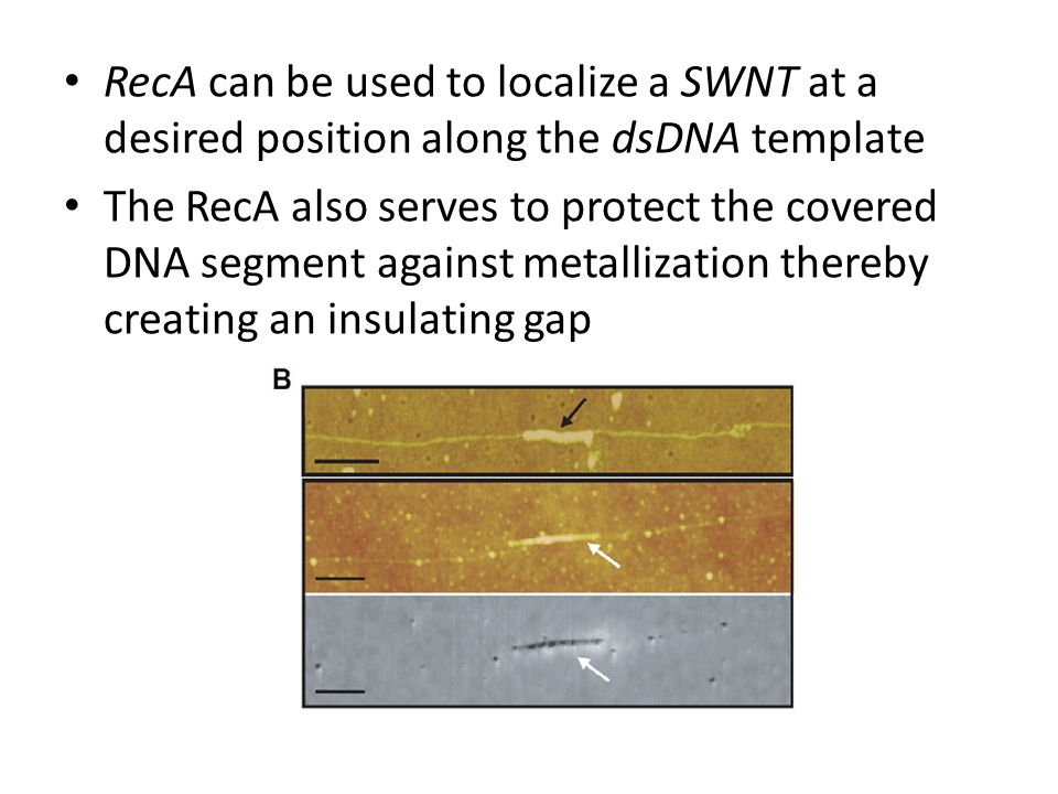 RecA can be used to localize a SWNT at a desired position along the dsDNA template