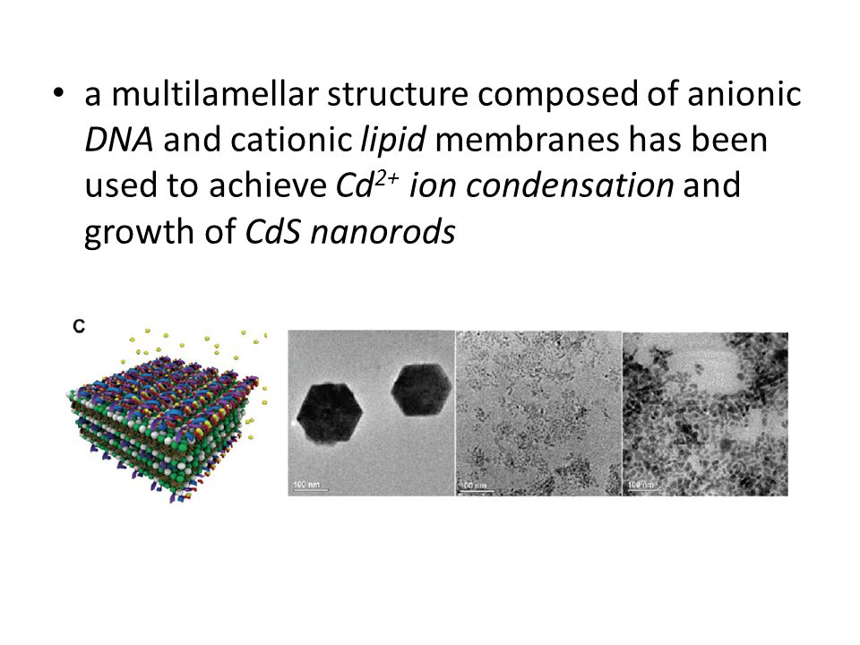 a multilamellar structure composed of anionic DNA and cationic lipid membranes has been used to achieve Cd2+ ion condensation and growth of CdS nanorods