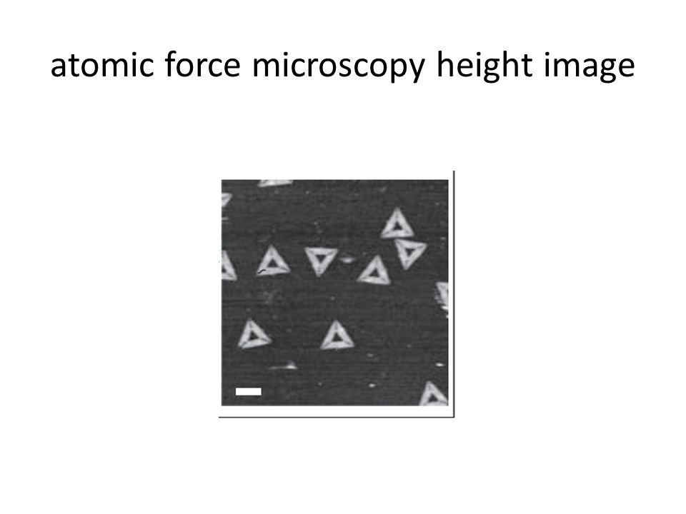 atomic force microscopy height image
