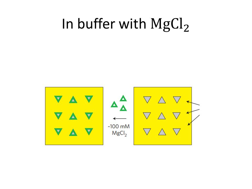 In buffer with MgCl 2