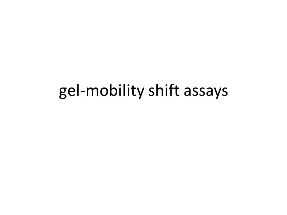 gel-mobility shift assays