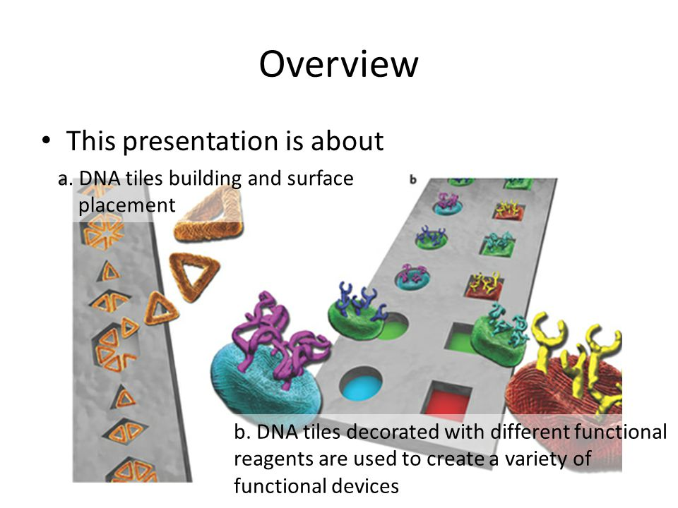 Overview This presentation is about a. DNA tiles building and surface