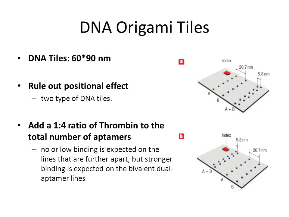 DNA Origami Tiles DNA Tiles: 60*90 nm Rule out positional effect