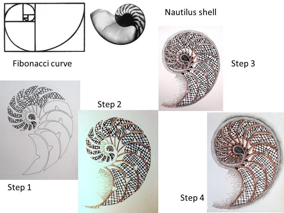 Nautilus shell Fibonacci curve Step 3 Step 2 Step 1 Step 4