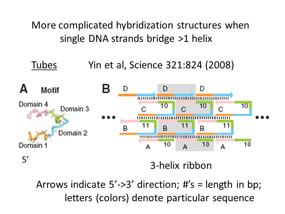 More complicated hybridization structures when