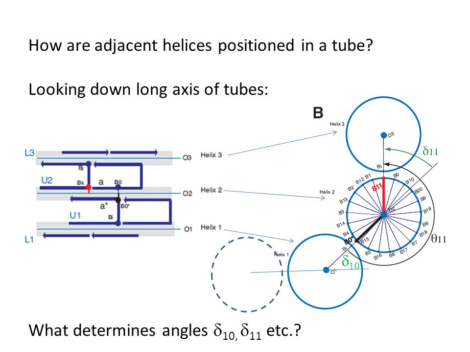How are adjacent helices positioned in a tube