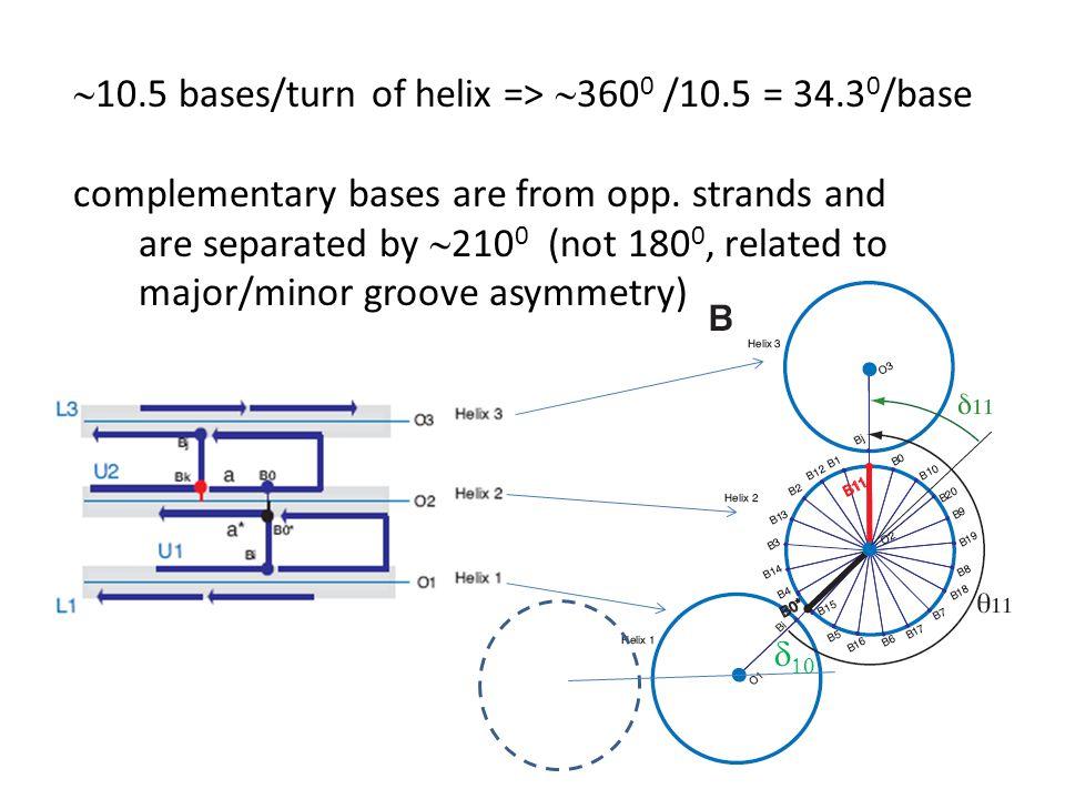 ~10.5 bases/turn of helix => ~3600 /10.5 = 34.30/base