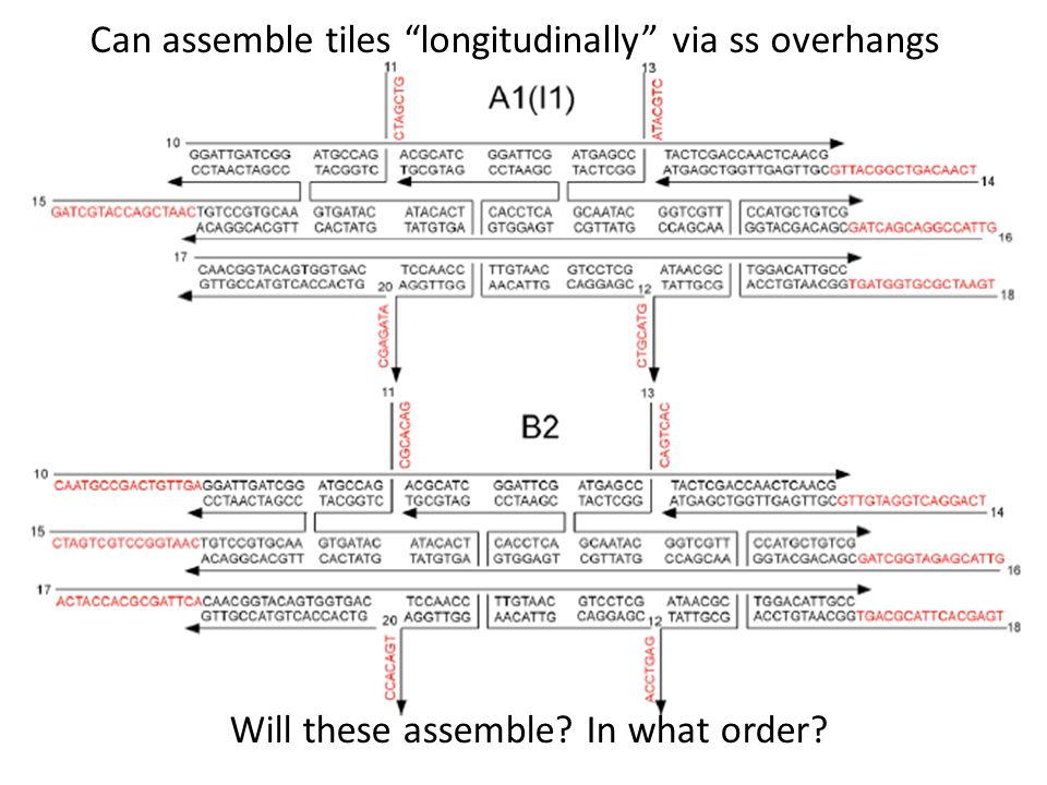 Can assemble tiles longitudinally via ss overhangs