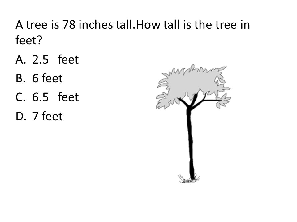A tree is 78 inches tall.How tall is the tree in feet