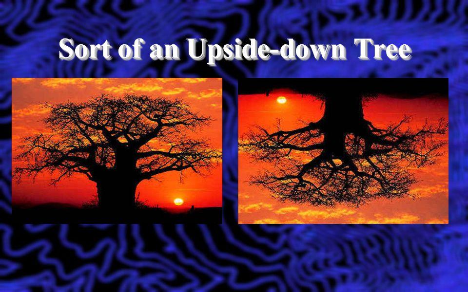 Sort of an Upside-down Tree