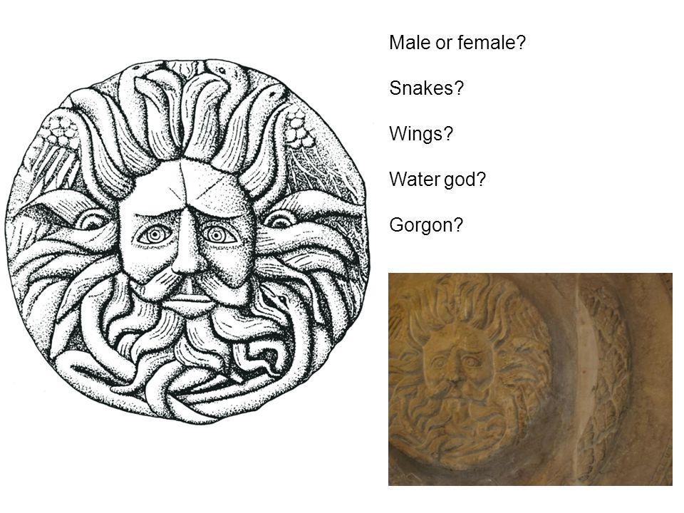Male or female Snakes Wings Water god Gorgon