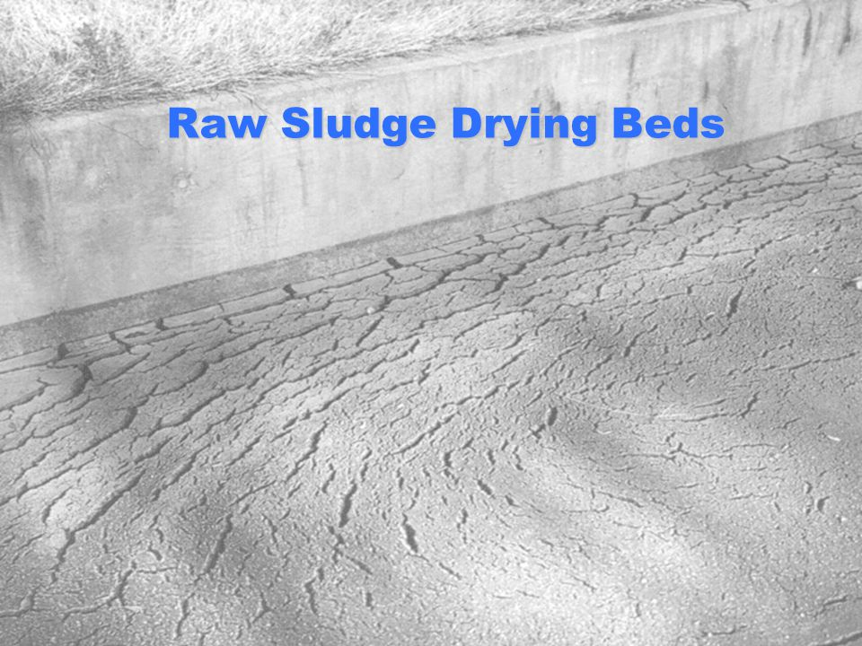 Raw Sludge Drying Beds