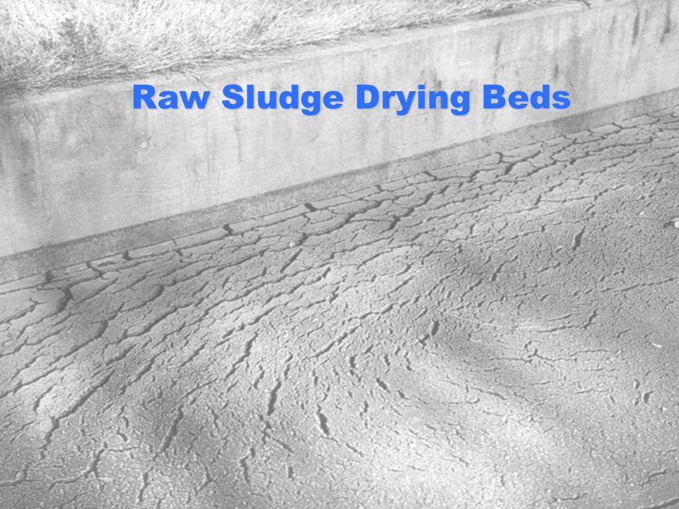 Raw Sludge Drying Beds