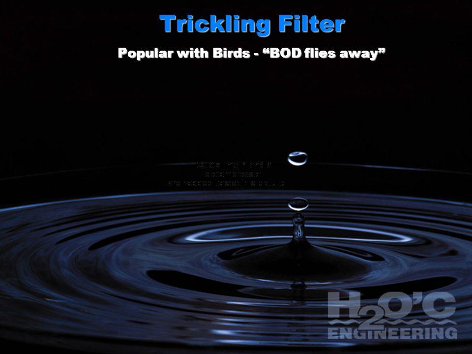 Trickling Filter Popular with Birds - BOD flies away