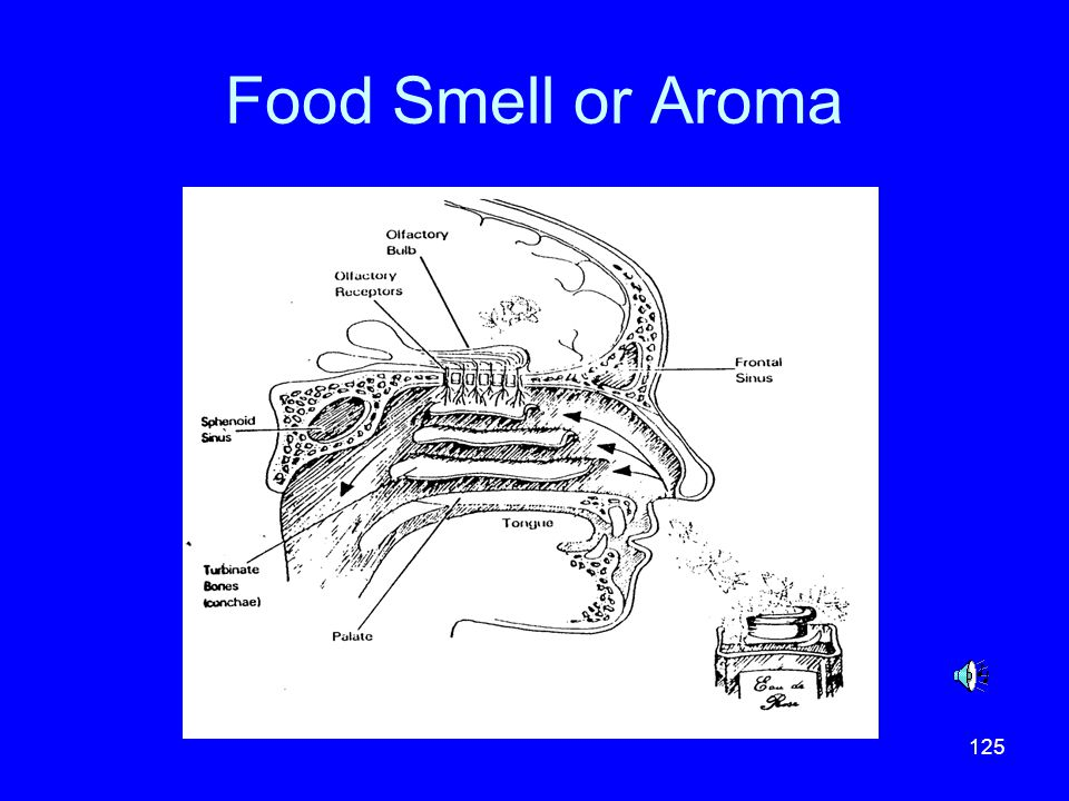 Food Smell or Aroma