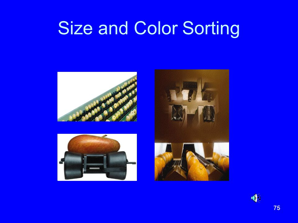 Size and Color Sorting