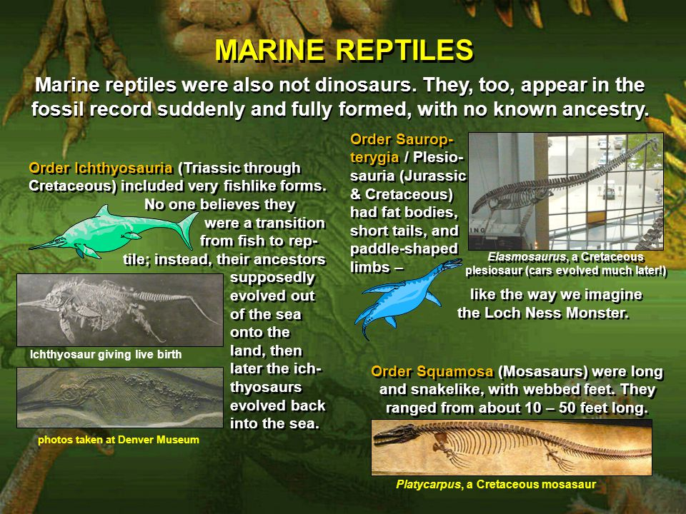 MARINE REPTILES Marine reptiles were also not dinosaurs. They, too, appear in the fossil record suddenly and fully formed, with no known ancestry.