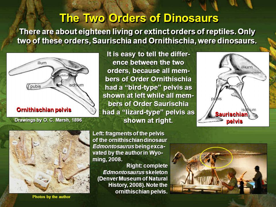 The Two Orders of Dinosaurs