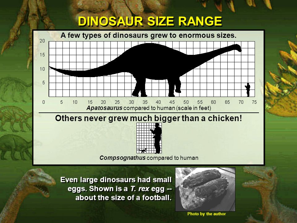 DINOSAUR SIZE RANGE Others never grew much bigger than a chicken!