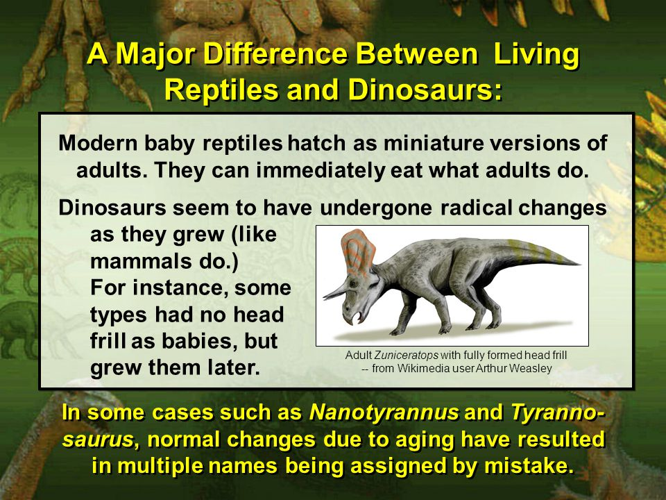 A Major Difference Between Living Reptiles and Dinosaurs: