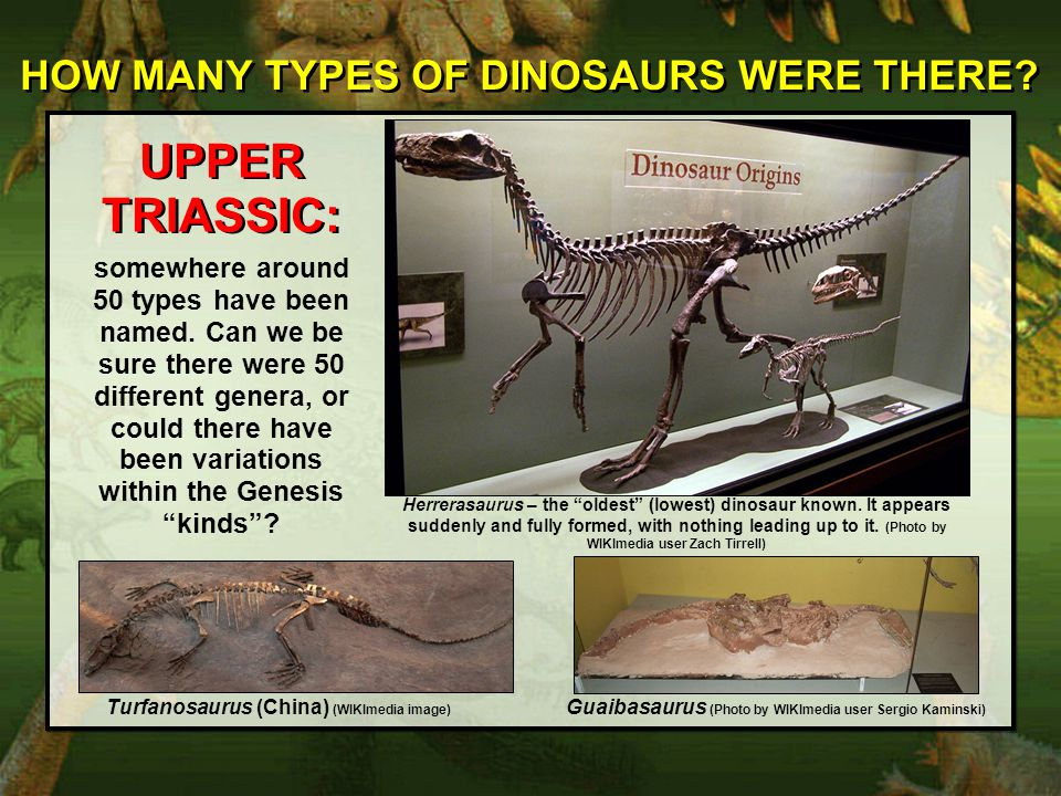 UPPER TRIASSIC: HOW MANY TYPES OF DINOSAURS WERE THERE