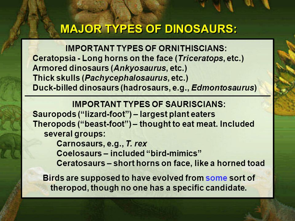 MAJOR TYPES OF DINOSAURS: