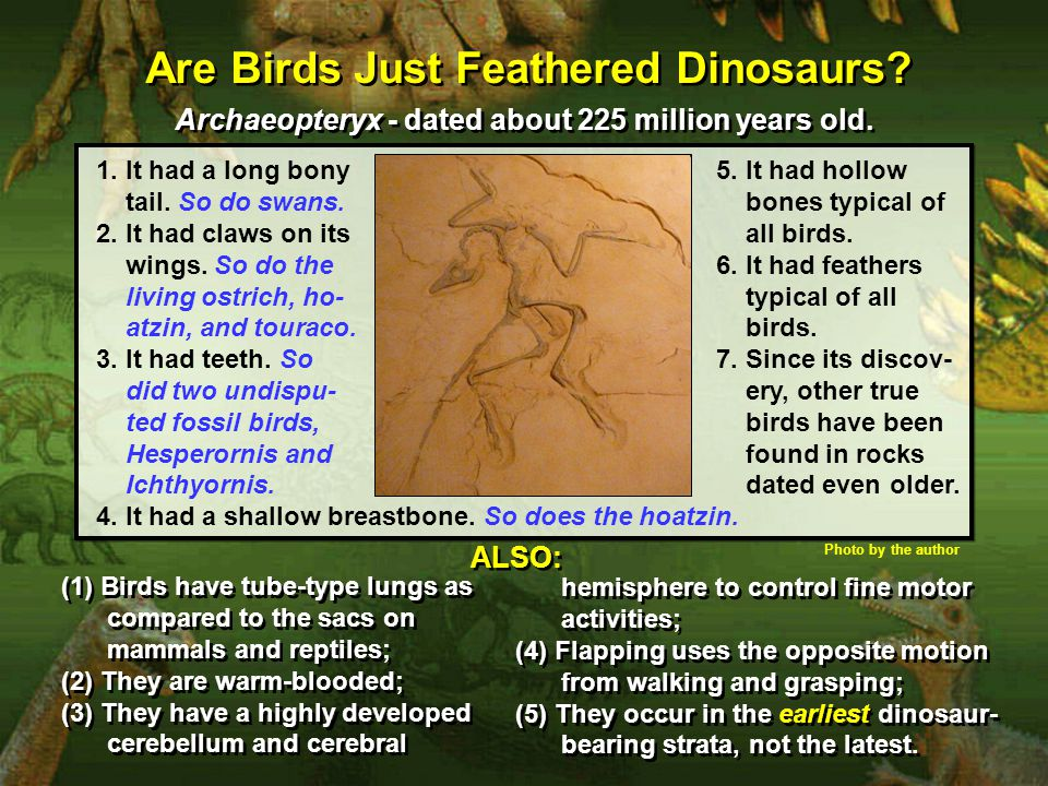 Are Birds Just Feathered Dinosaurs