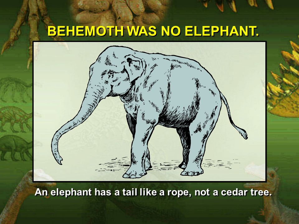 BEHEMOTH WAS NO ELEPHANT.