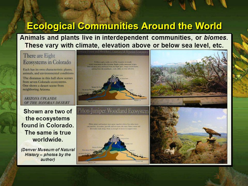 Ecological Communities Around the World