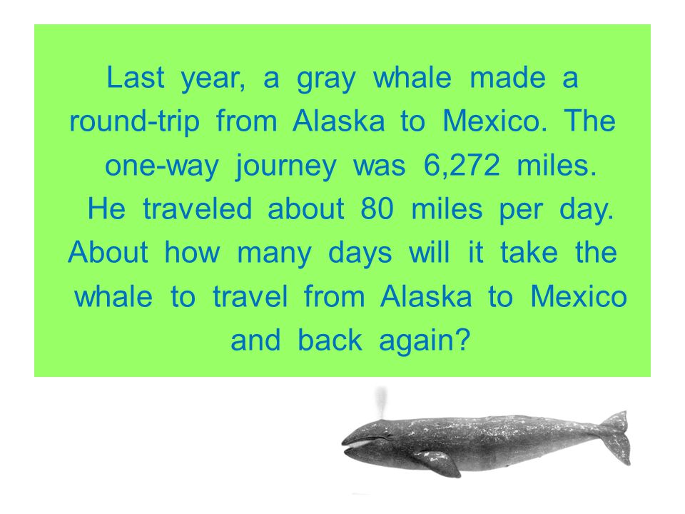 Last year, a gray whale made a round-trip from Alaska to Mexico