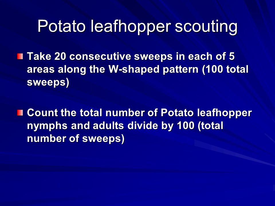 Potato leafhopper scouting