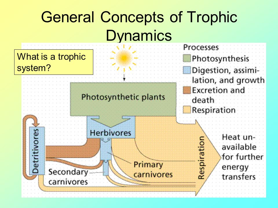 General Concepts of Trophic Dynamics